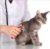 Ветеринарные клиники в Рославле